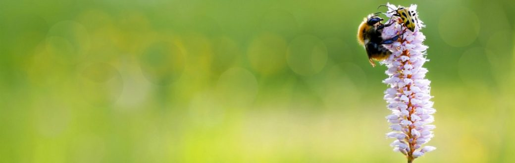 cropped-biodiversiteit_lp-site-1.jpg